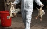 Cúm H7N9 tiến sát biên giới Việt Nam