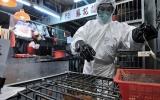 Một người Trung Quốc đã chết do bị nhiễm vius H7N9