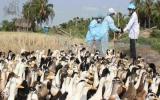 Thủ tướng đề nghị tăng cường phòng chống dịch cúm gia cầm