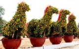 Đường hoa Bạch Đằng và chợ hoa Tết Giáp Ngọ
