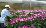 Thành công với mô hình trồng lan Denro