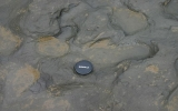 Tìm thấy vết chân người sống cách đây 800.000 năm