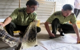 Thủ tướng yêu cầu tăng cường bảo tồn động vật hoang dã