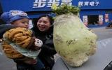 Củ cải khổng lồ nặng 9 kg