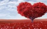 Yêu thương dung hòa