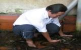 Nuôi lươn không bùn cho giá trị kinh tế cao