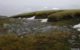 Rêu Nam Cực tái sinh sau 1.500 năm bị đóng băng