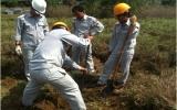 Quan trắc chất lượng môi trường đất: Chưa biến động nhiều
