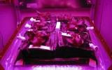 NASA đưa vườn trồng rau lên vũ trụ