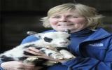 Chú cừu có bộ lông của bò sữa