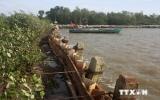 Đê biển Đông và Tây ở Cà Mau bị sạt lở nghiêm trọng