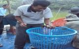 Nông dân Phùng Văn Thức: Luôn tìm tòi để vươn lên