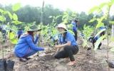 """Đoàn khối Doanh nghiệp: Trồng 1.000 cây xanh hưởng ứng """"Tết trồng cây đời đời nhớ ơn Bác Hồ"""""""