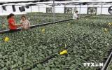 Ngăn chặn việc thu gom gen quý của tư thương nước ngoài