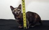Con mèo chỉ cao 13 cm
