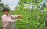 Vươn lên từ mô hình trồng rau an toàn