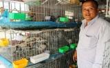 TX. Thuận An:  Nhiều mô hình nông nghiệp đô thị hiệu quả