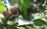Mỹ ưu tiên Việt Nam trong chương trình hỗ trợ đa dạng sinh học