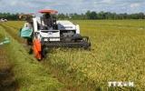 Sản lượng vụ lúa Hè Thu tại ĐBSCL ước đạt 9,5 triệu tấn