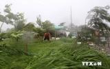 Bão số 2 có khả năng đi vào địa phận Quảng Ninh và Hải Phòng