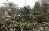 Bão số 2 vào Quảng Ninh: TP Móng Cái mất điện, tôn bay lả tả