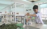 Tự chế nước hoa xanh xịt phòng