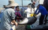 Tổ quốc bên bờ sóng: Sức sống Sầm Sơn