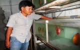 Chàng kỹ sư và giấc mơ thương hiệu cá cảnh quốc tế