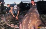 Bắt được cá đuối khổng lồ nặng gần 100 kg