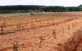 Xã Lạc An, huyện Bắc Tân Uyên: Phát triển Tổ hợp tác trồng cây có múi