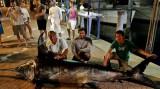 Ba cha con vật lộn với chú cá kiếm khổng lồ nặng hơn 300kg