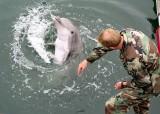 Nga đã kiểm soát chương trình cá heo chiến đấu ở Crimea