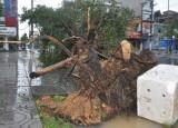Họp trực tuyến nhằm khắc phục thiệt hại của cơn bão số 3