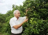 Phong trào nông dân sản xuất, kinh doanh giỏi: Xuất hiện nhiều cách làm hiệu quả