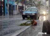 Giao thông ở Nhật Bản hỗn loạn vì siêu bão Vongfong đổ bộ