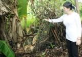 Công an thị xã Thuận An vào cuộc điều tra vụ trộm