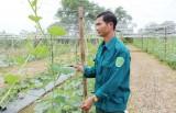 Sản xuất nông sản an toàn mang lại hiệu quả cao
