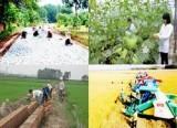 Nghiên cứu sửa tiêu chí nông thôn mới