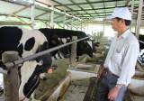 Hỗ trợ nông dân nâng cao hiệu quả chăn nuôi bò sữa