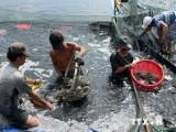 Cần Thơ-Nagasaki hợp tác lĩnh vực thủy sản và xử lý nguồn nước