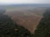 Diện tích rừng Amazon bị phá hoại đã tăng lên mức báo động
