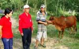 """Dự án """"Ngân hàng bò"""":  Giúp hội viên phát triển kinh tế gia đình"""