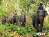 Đầu tư 74 tỷ đồng khẩn cấp bảo tồn voi rừng trên địa bàn Đồng Nai