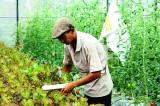 Nông nghiệp đô thị, nông nghiệp ứng dụng kỹ thuật cao: Nhiều kết quả tốt