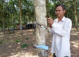 Đồng bào Khmer xã An Bình, huyện Phú Giáo:  Vươn lên thoát nghèo