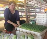 Nhiều sản phẩm nông nghiệp của Bình Dương tham gia hội chợ