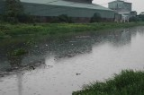 Nỗ lực khắc phục ô nhiễm ở rạch Vĩnh Bình