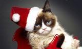 """""""Mèo cau có"""" kiếm 100 triệu USD trong 2 năm"""