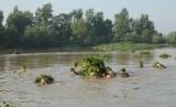 Trung đoàn 31, Sư đoàn 309, Quân đoàn 4: Diễn tập vượt sông