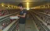 Xã Tam Lập, huyện Phú Giáo: Phát huy các thế mạnh trong phát triển kinh tế